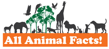 All Animal Facts