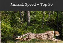 Animal Speed - Top 20